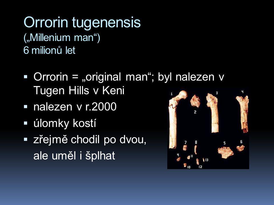 "Orrorin tugenensis (""Millenium man"") 6 milionů let  Orrorin = ""original man""; byl nalezen v Tugen Hills v Keni  nalezen v r.2000  úlomky kostí  zř"