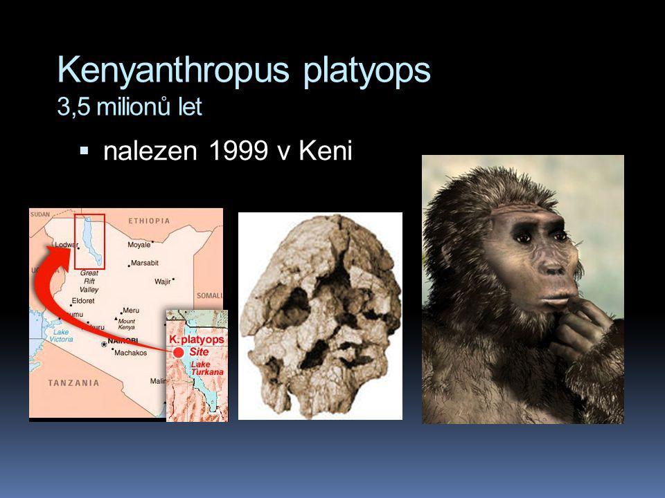 Kenyanthropus platyops 3,5 milionů let  nalezen 1999 v Keni