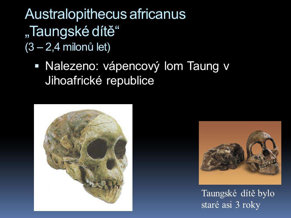 """Australopithecus africanus """"Taungské dítě"""" (3 – 2,4 milonů let)  Nalezeno: vápencový lom Taung v Jihoafrické republice Taungské dítě bylo staré asi 3"""
