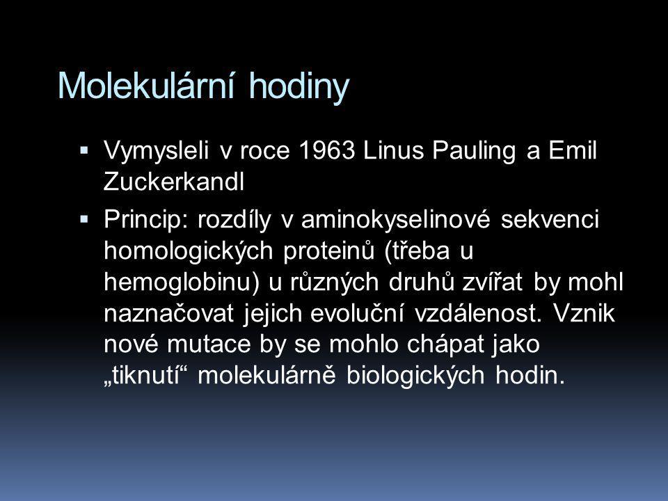 Molekulární hodiny  Vymysleli v roce 1963 Linus Pauling a Emil Zuckerkandl  Princip: rozdíly v aminokyselinové sekvenci homologických proteinů (třeb