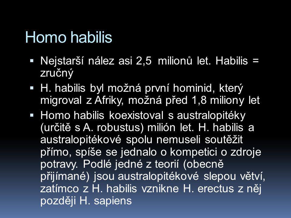 Homo habilis  Nejstarší nález asi 2,5 milionů let. Habilis = zručný  H. habilis byl možná první hominid, který migroval z Afriky, možná před 1,8 mil