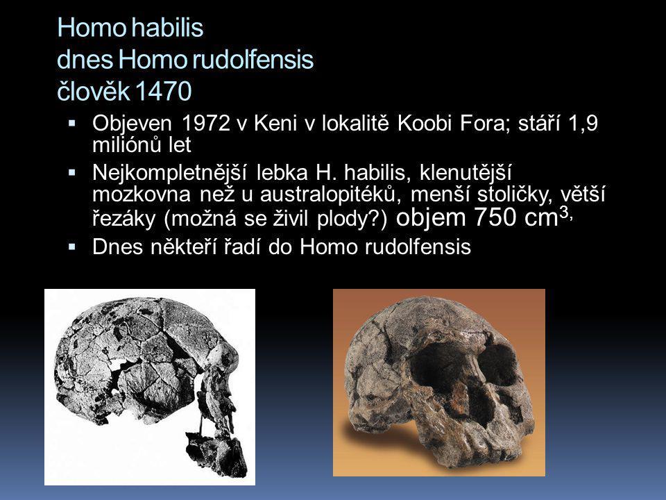 Homo habilis dnes Homo rudolfensis člověk 1470  Objeven 1972 v Keni v lokalitě Koobi Fora; stáří 1,9 miliónů let  Nejkompletnější lebka H. habilis,