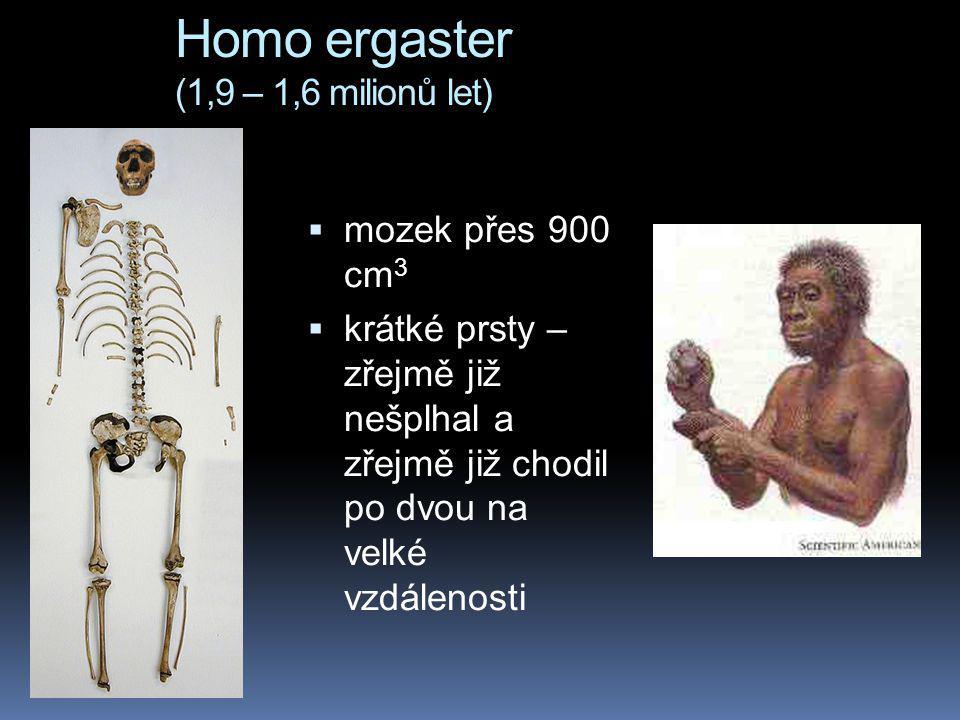 Homo ergaster (1,9 – 1,6 milionů let)  mozek přes 900 cm 3  krátké prsty – zřejmě již nešplhal a zřejmě již chodil po dvou na velké vzdálenosti