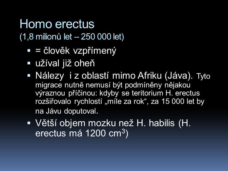 Homo erectus (1,8 milionů let – 250 000 let)  = člověk vzpřímený  užíval již oheň  Nálezy i z oblastí mimo Afriku (Jáva). Tyto migrace nutně nemusí