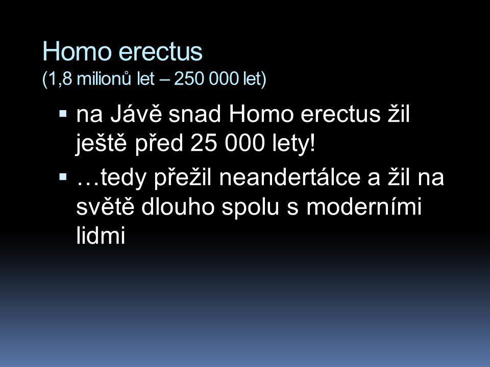 Homo erectus (1,8 milionů let – 250 000 let)  na Jávě snad Homo erectus žil ještě před 25 000 lety!  …tedy přežil neandertálce a žil na světě dlouho