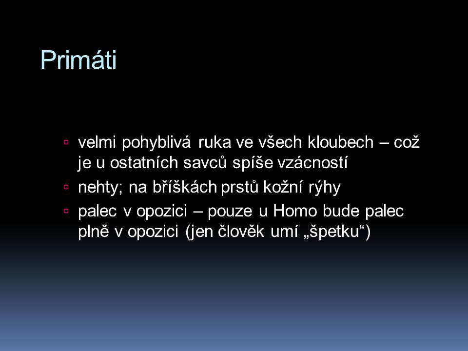 Homo (sapiens) neanderthalensis (130 000 – 30 000 let)  Poprvé nalezen v údolí Neander v Německu  Objem mozku až 1 700 cm 3 (!!)  Naleziště u nás:  jeskyně Šipka u Štramberka  Moravský kras  Gánovce u Popradu