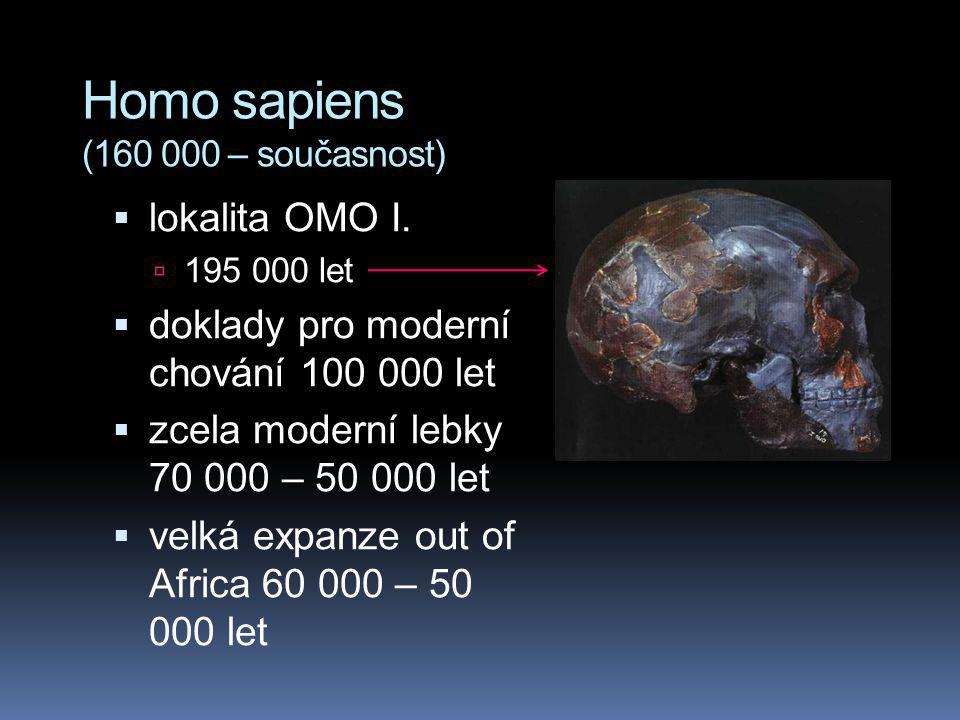 Homo sapiens (160 000 – současnost)  lokalita OMO I.  195 000 let  doklady pro moderní chování 100 000 let  zcela moderní lebky 70 000 – 50 000 le