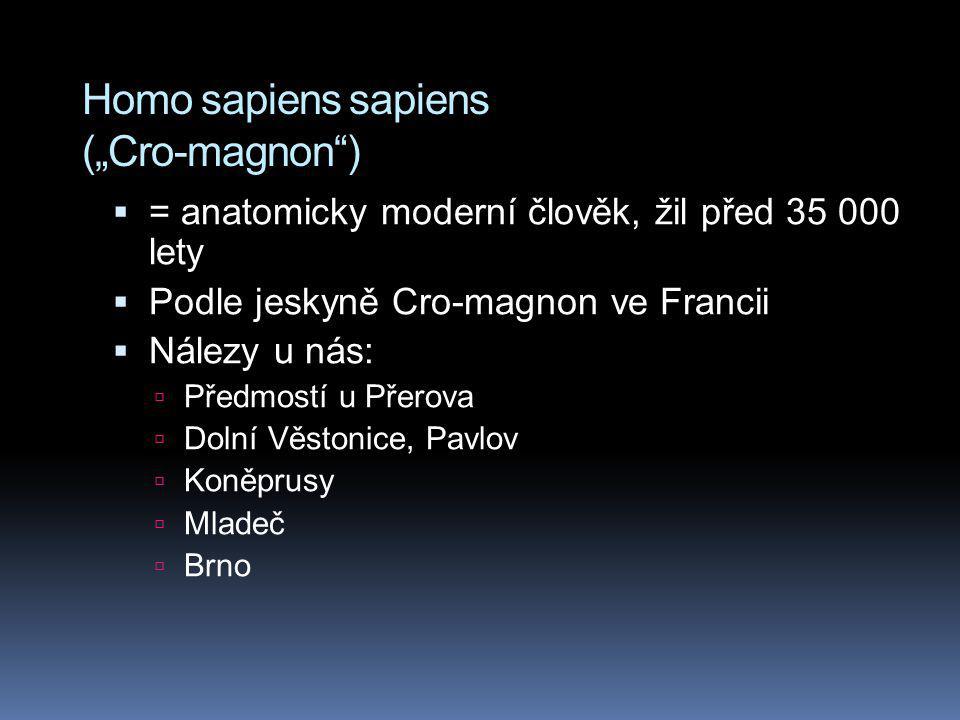 """Homo sapiens sapiens (""""Cro-magnon"""")  = anatomicky moderní člověk, žil před 35 000 lety  Podle jeskyně Cro-magnon ve Francii  Nálezy u nás:  Předmo"""