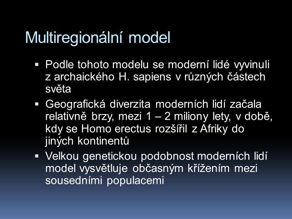 Multiregionální model  Podle tohoto modelu se moderní lidé vyvinuli z archaického H. sapiens v různých částech světa  Geografická diverzita moderníc
