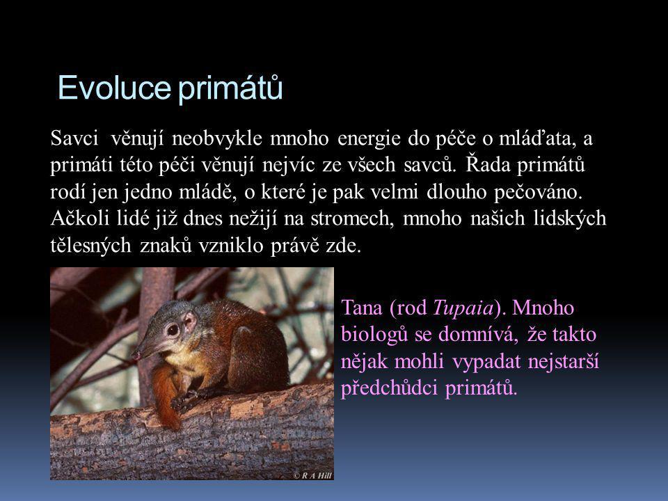 Evoluce primátů Savci věnují neobvykle mnoho energie do péče o mláďata, a primáti této péči věnují nejvíc ze všech savců. Řada primátů rodí jen jedno