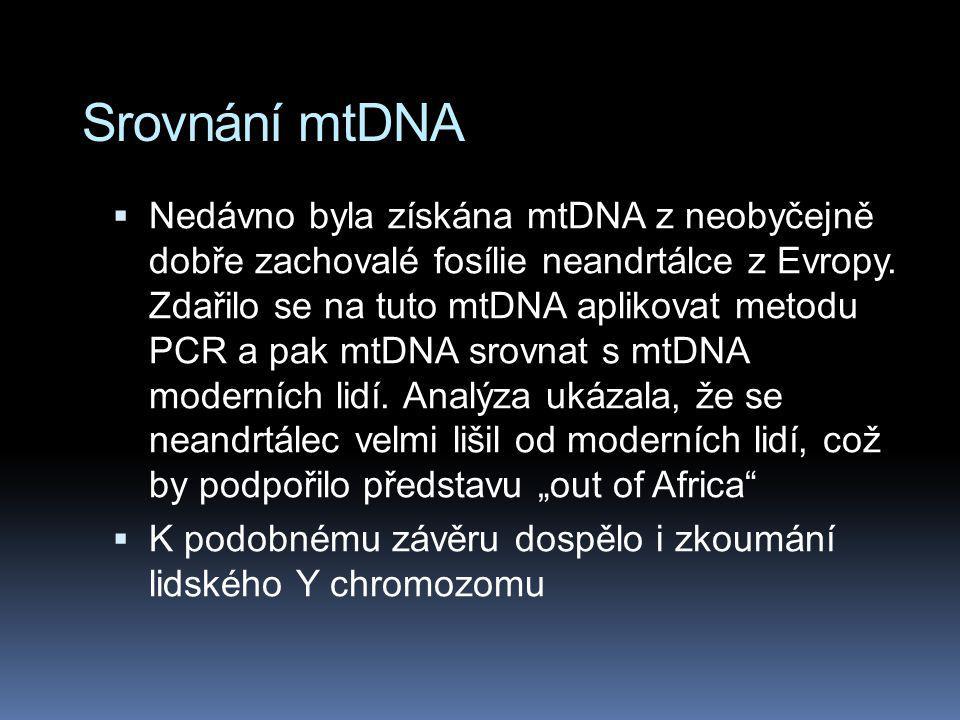 Srovnání mtDNA  Nedávno byla získána mtDNA z neobyčejně dobře zachovalé fosílie neandrtálce z Evropy. Zdařilo se na tuto mtDNA aplikovat metodu PCR a