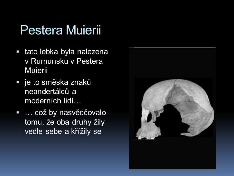 Pestera Muierii  tato lebka byla nalezena v Rumunsku v Pestera Muierii  je to směska znaků neandertálců a moderních lidí…  … což by nasvědčovalo to