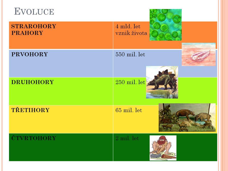 E VOLUCE STRAROHORY PRAHORY 4 mld. let vznik života PRVOHORY 550 mil. let DRUHOHORY 250 mil. let TŘETIHORY 65 mil. let ČTVRTOHORY 2 mil. let