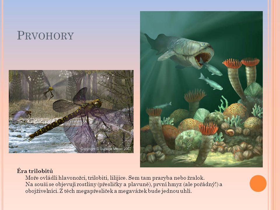 P RVOHORY Éra trilobitů Moře ovládli hlavonožci, trilobiti, lilijice. Sem tam praryba nebo žralok. Na souši se objevují rostliny (přesličky a plavuně)