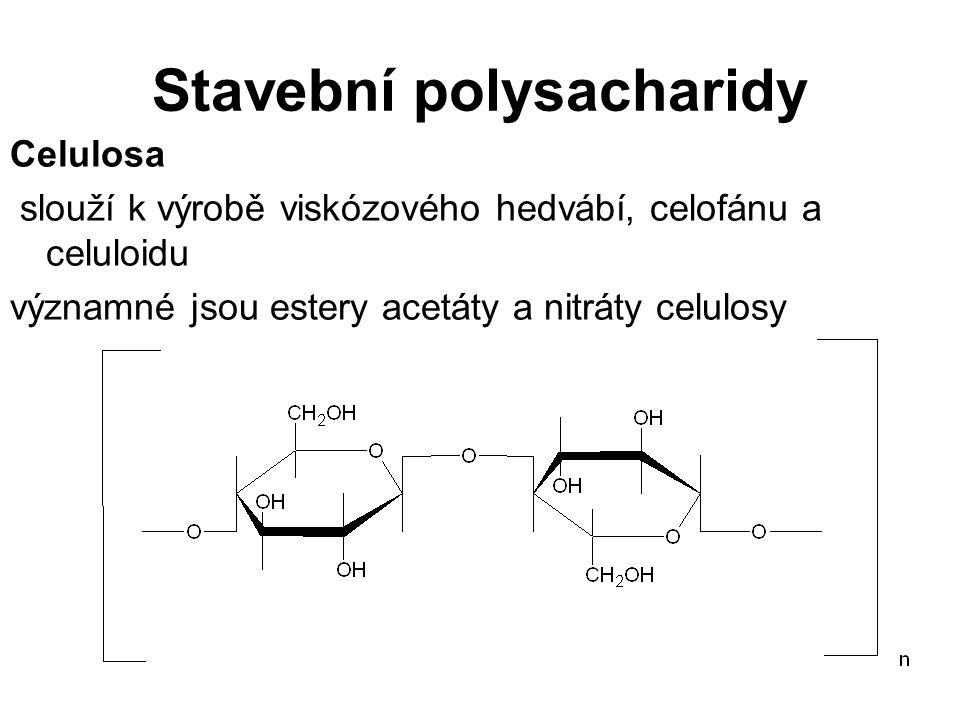 Stavební polysacharidy Celulosa slouží k výrobě viskózového hedvábí, celofánu a celuloidu významné jsou estery acetáty a nitráty celulosy
