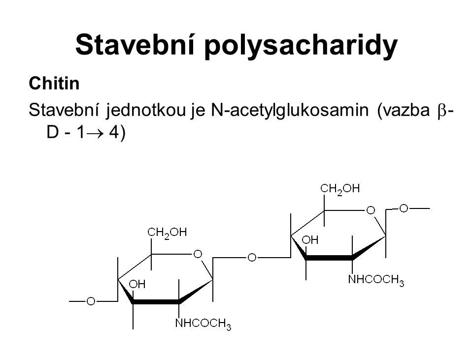 Stavební polysacharidy Chitin Stavební jednotkou je N-acetylglukosamin (vazba  - D - 1  4)