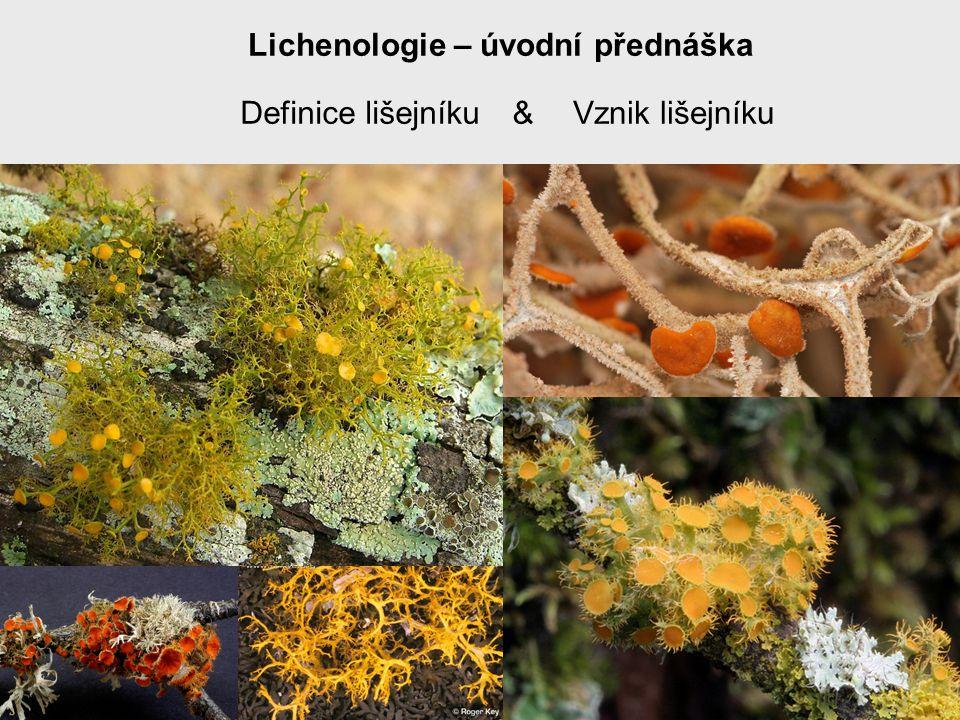 Vznik lišejníků (fylogenetický aspekt) Nejstarší známý lišejník je Winfrenatia reticulata známá z devonských rohovců .