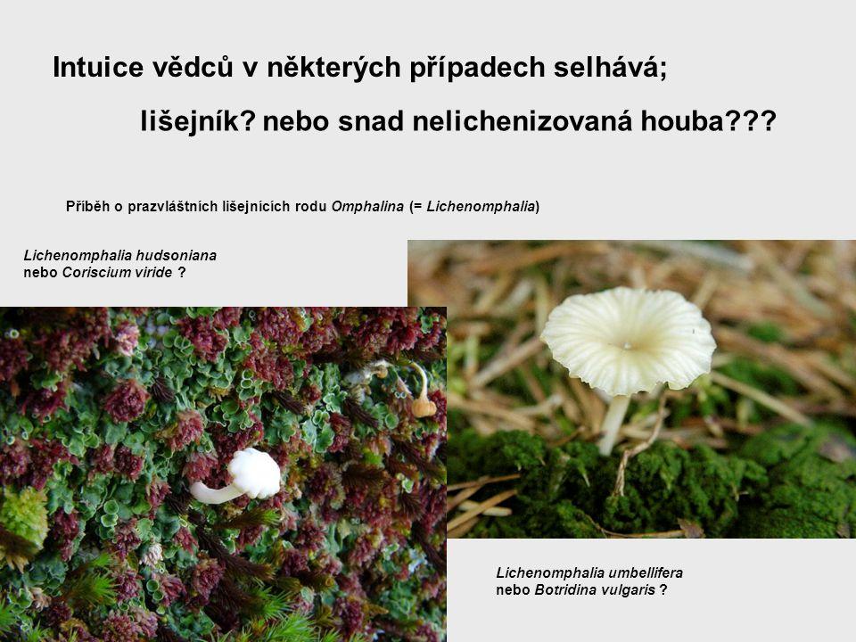 Intuice vědců v některých případech selhává; lišejník? nebo snad nelichenizovaná houba??? Příběh o prazvláštních lišejnících rodu Omphalina (= Licheno