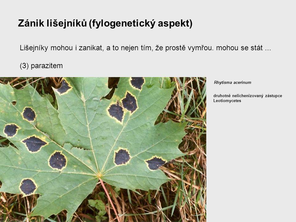 Zánik lišejníků (fylogenetický aspekt) Lišejníky mohou i zanikat, a to nejen tím, že prostě vymřou. mohou se stát... (3) parazitem Rhytisma acerinum d