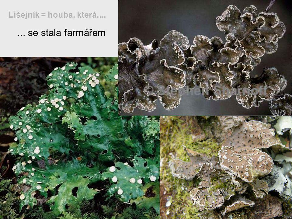... se stala farmářem Lišejník = houba, která....