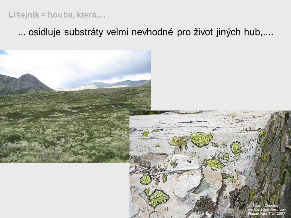 ... osidluje substráty velmi nevhodné pro život jiných hub,.... Lišejník = houba, která....