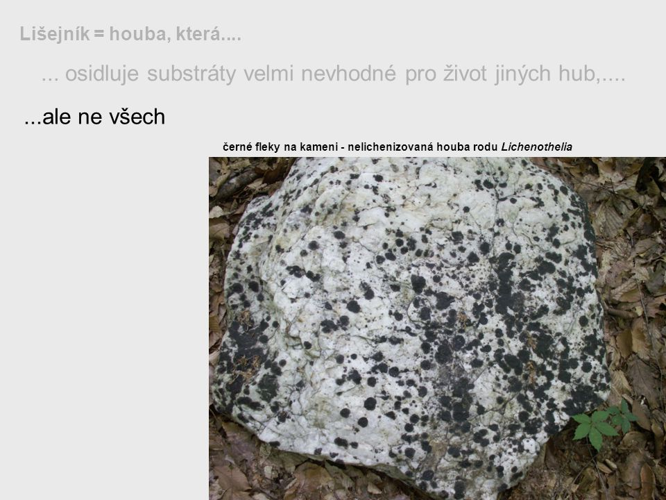 ... osidluje substráty velmi nevhodné pro život jiných hub,.... Lišejník = houba, která.......ale ne všech černé fleky na kameni - nelichenizovaná hou