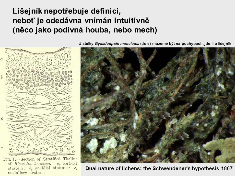 Lišejník nepotřebuje definici, neboť je odedávna vnímán intuitivně (něco jako podivná houba, nebo mech) Dual nature of lichens: the Schwendener's hypo