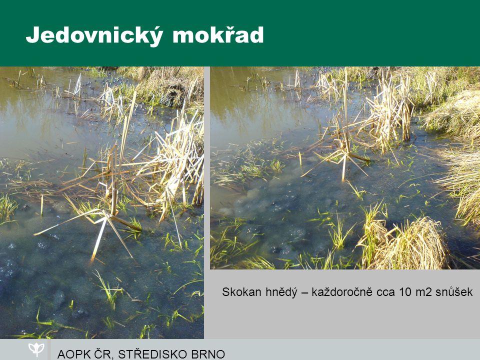 AOPK ČR, STŘEDISKO BRNO Jedovnický mokřad Skokan hnědý – každoročně cca 10 m2 snůšek