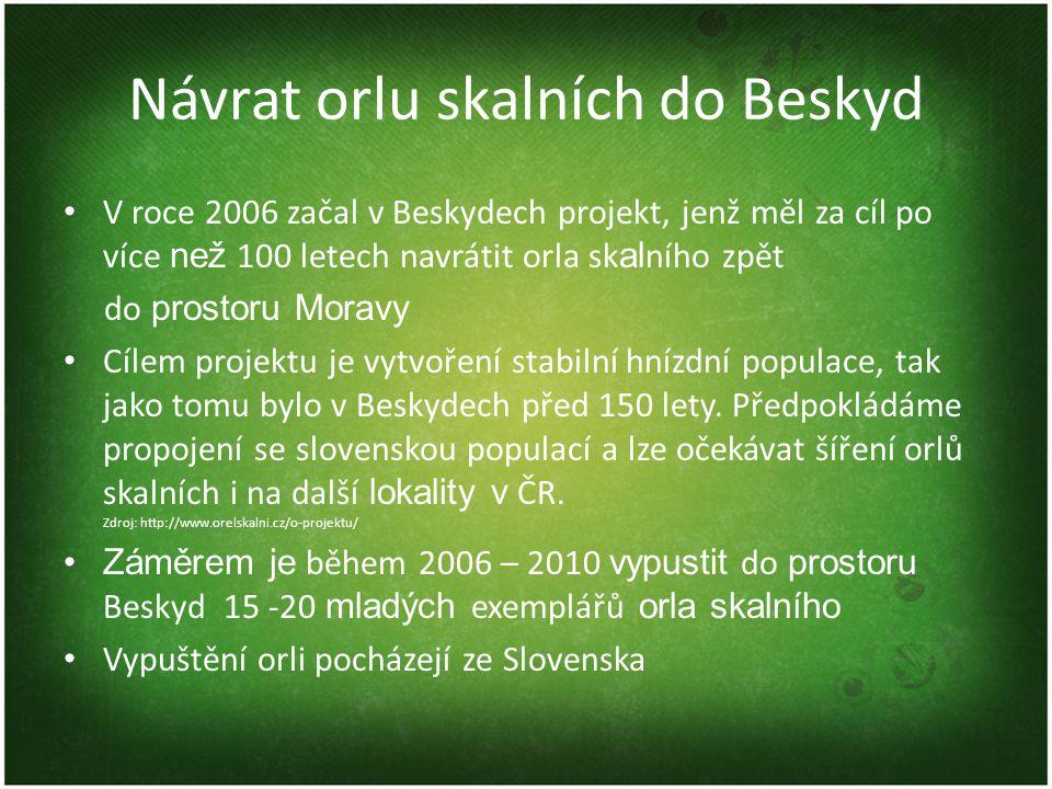 Návrat orlu skalních do Beskyd V roce 2006 začal v Beskydech projekt, jenž měl za cíl po více než 100 letech navrátit orla sk al ního zpět do prostoru Moravy Cílem projektu je vytvoření stabilní hnízdní populace, tak jako tomu bylo v Beskydech před 150 lety.
