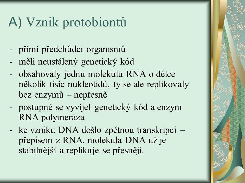 A) Vznik protobiontů -přímí předchůdci organismů -měli neustálený genetický kód -obsahovaly jednu molekulu RNA o délce několik tisíc nukleotidů, ty se ale replikovaly bez enzymů – nepřesně -postupně se vyvíjel genetický kód a enzym RNA polymeráza -ke vzniku DNA došlo zpětnou transkripcí – přepisem z RNA, molekula DNA už je stabilnější a replikuje se přesněji.