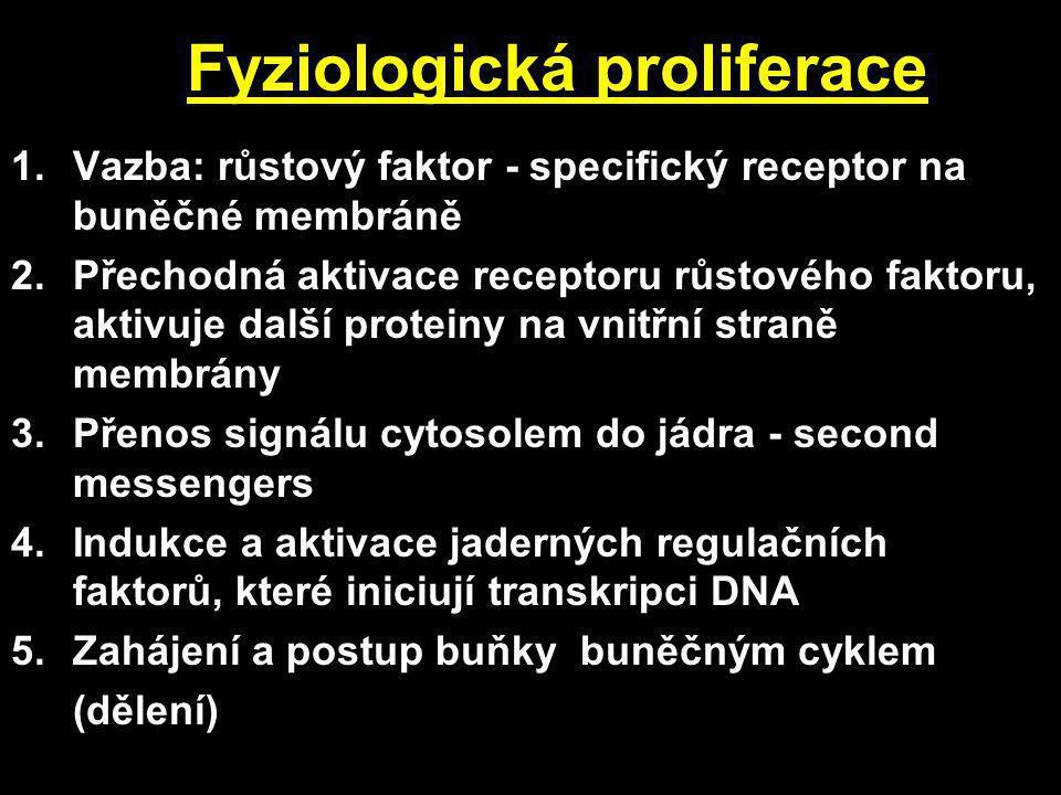 Fyziologická proliferace 1.Vazba: růstový faktor - specifický receptor na buněčné membráně 2.Přechodná aktivace receptoru růstového faktoru, aktivuje další proteiny na vnitřní straně membrány 3.Přenos signálu cytosolem do jádra - second messengers 4.Indukce a aktivace jaderných regulačních faktorů, které iniciují transkripci DNA 5.Zahájení a postup buňky buněčným cyklem (dělení)