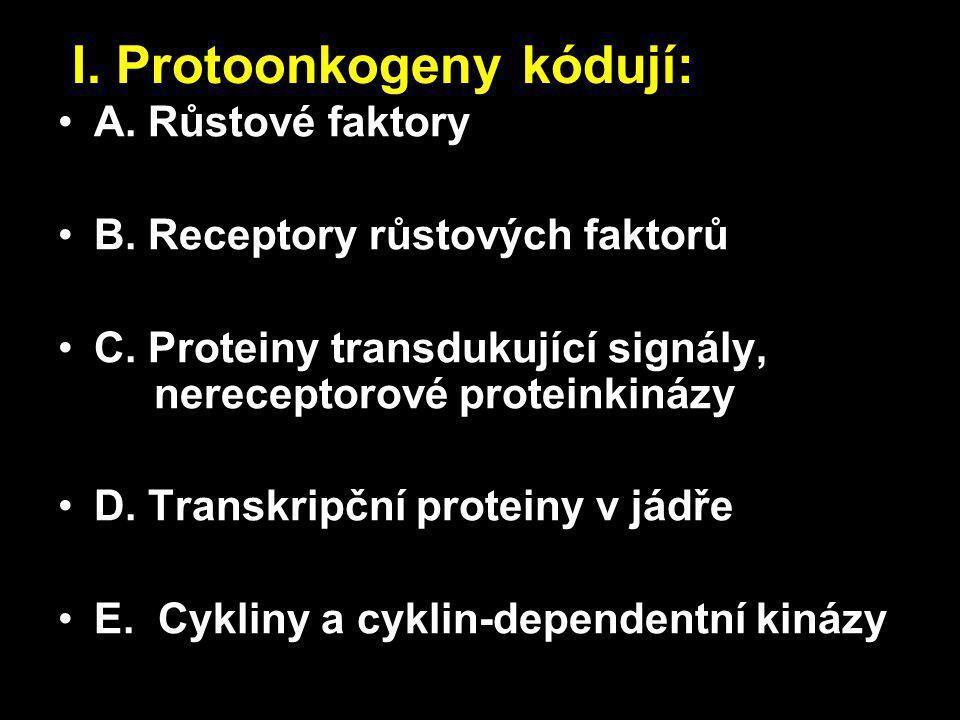 I. Protoonkogeny kódují: A. Růstové faktory B. Receptory růstových faktorů C.