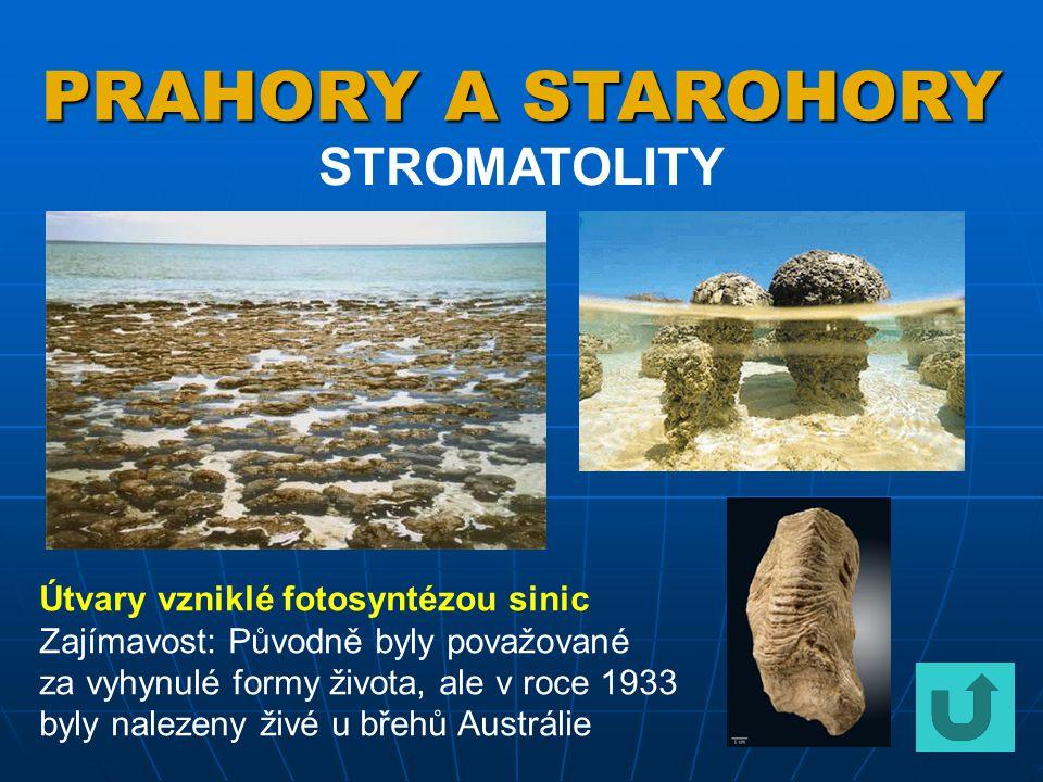Ediacarská fauna Proslulým nalezištěm fauny z konce starohor (600 miliónů let) je Ediacara v Austrálii