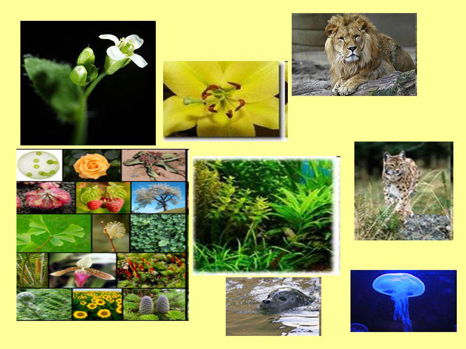 Popis biosféry: Počátek vzniku biosféry je možné počítat od okamžiku vzniku života na Zemi.