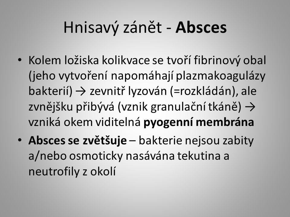 Hnisavý zánět - Absces Kolem ložiska kolikvace se tvoří fibrinový obal (jeho vytvoření napomáhají plazmakoagulázy bakterií) → zevnitř lyzován (=rozklá
