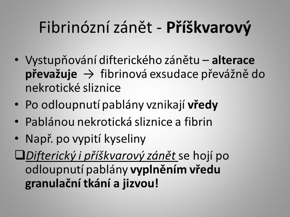Fibrinózní zánět - Příškvarový Vystupňování difterického zánětu – alterace převažuje → fibrinová exsudace převážně do nekrotické sliznice Po odloupnut