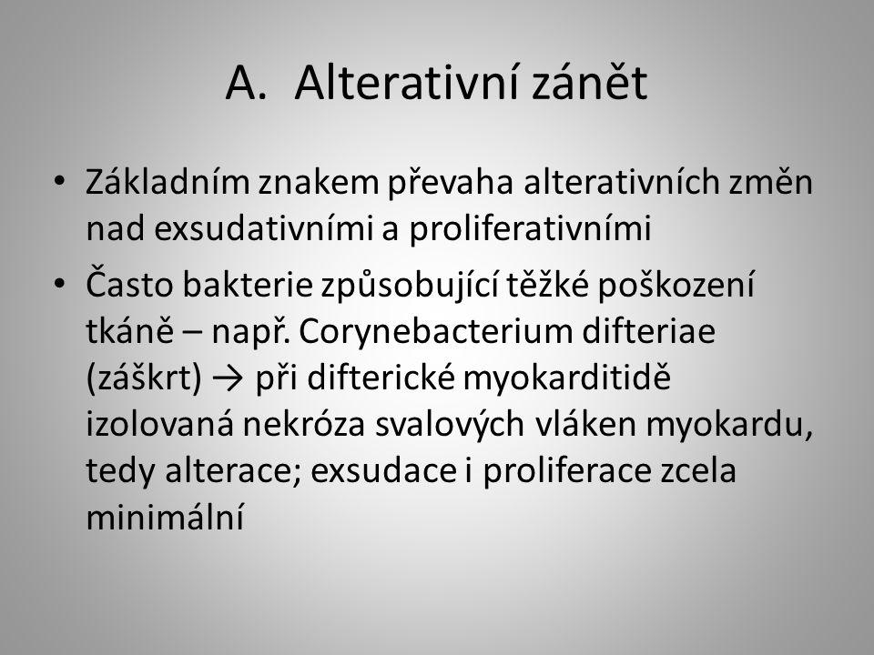 A. Alterativní zánět Základním znakem převaha alterativních změn nad exsudativními a proliferativními Často bakterie způsobující těžké poškození tkáně