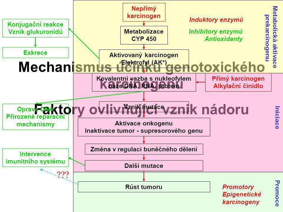 Mechanismus účinku genotoxického karcinogenu Faktory ovlivňující vznik nádoru Nepřímý karcinogen Metabolizace CYP 450 Aktivovaný karcinogen Elektrofyl (AK + ) Konjugační reakce Vznik glukuronidů Exkrece Přímý karcinogen Alkylační činidlo Kovalentní vazba s nukleofylem báze DNA, RNA, protein Oprava DNA Přirozené reparační mechanismy Vznik mutace Aktivace onkogenu Inaktivace tumor - supresorového genu Změna v regulaci buněčného dělení Další mutace Intervence imunitního systému Růst tumoru Induktory enzymů Inhibitory enzymů Antioxidanty ??.