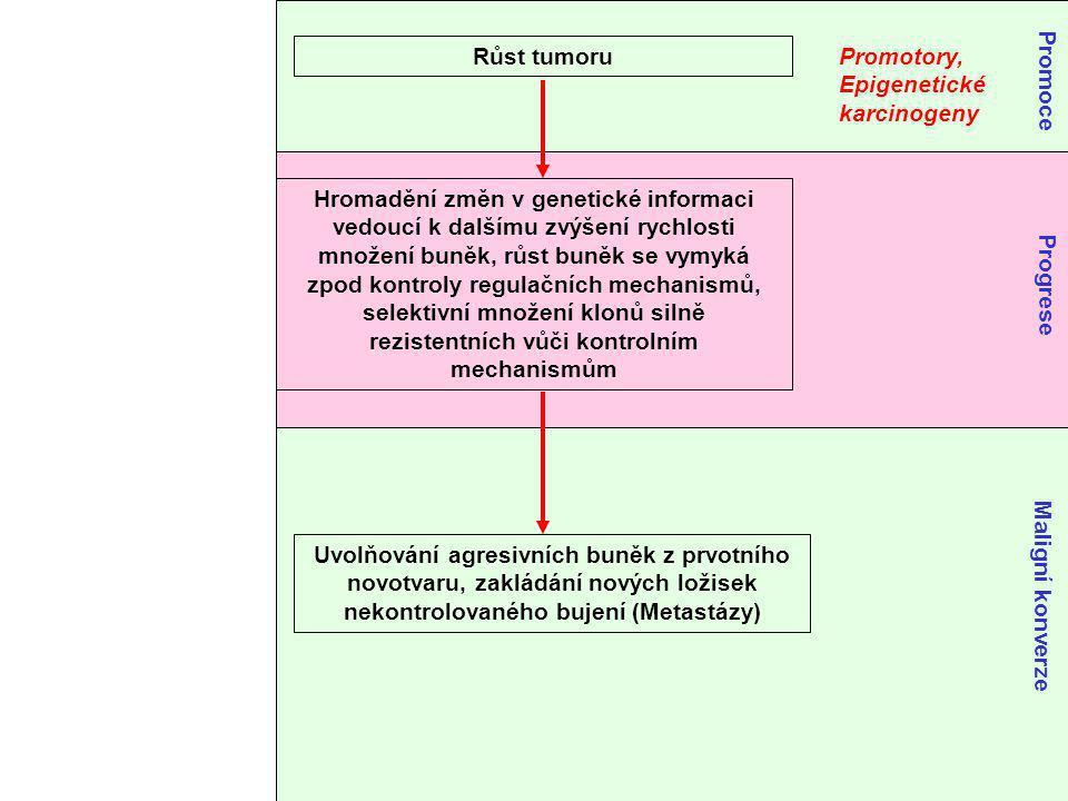 Růst tumoru Promotory, Epigenetické karcinogeny Promoce Hromadění změn v genetické informaci vedoucí k dalšímu zvýšení rychlosti množení buněk, růst buněk se vymyká zpod kontroly regulačních mechanismů, selektivní množení klonů silně rezistentních vůči kontrolním mechanismům Progrese Uvolňování agresivních buněk z prvotního novotvaru, zakládání nových ložisek nekontrolovaného bujení (Metastázy) Maligní konverze
