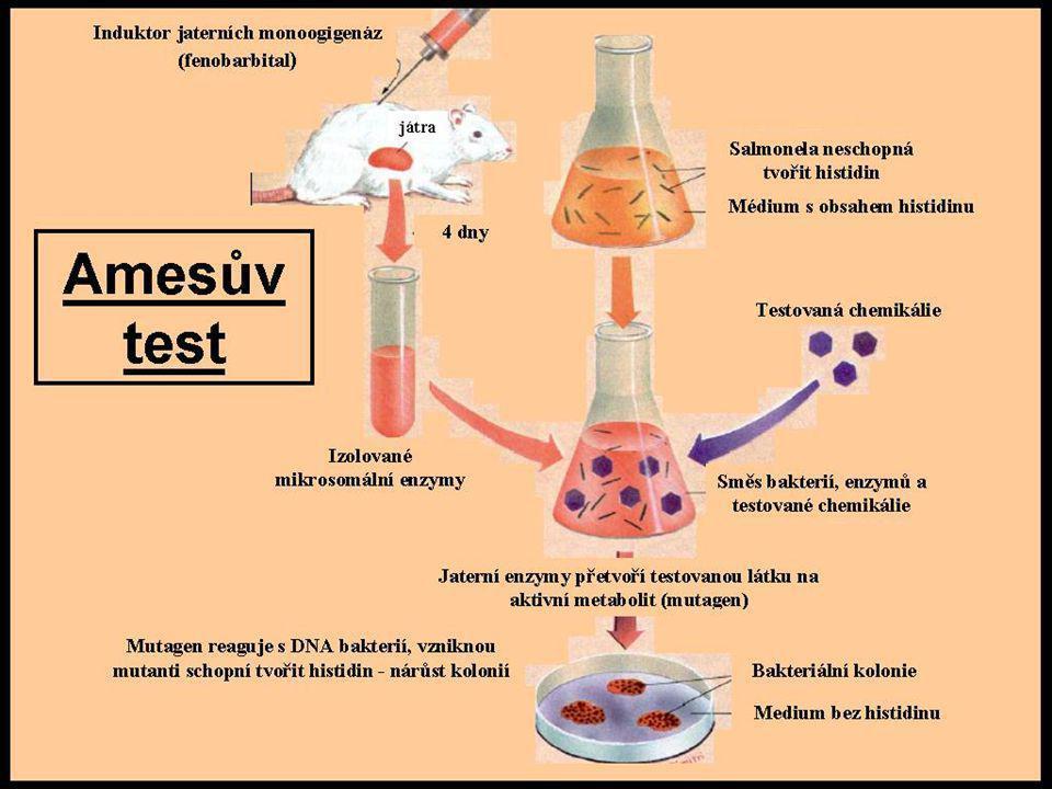 Krátkodobé (screeningové) testy mutagenity Amesův test využívají se histidin auxotrofní kmeny Salmonela typhimurium, které se nejsou schopné množit bez přítomnosti histidinu působením mutagenní látky (metabolitu) dojde ke zpětné mutaci a mutanti jsou schopni histidin syntetizovat - množí se bez vnějšího zdroje histidinu, na misce narůstají kolonie v případě, že testovaná látka není mutagenní, auxotrofní kmen spotřebuje vnější zásobu histidinu a postupně vyhyne rychlý levný test, výsledky ne vždy plně přenositelné na člověka Reverzní testy využití zpětných mutací (reverze) působením známého mutagenu nejprve vytvoříme bakteriální kmen, který není schopen syntetizovat některý pro život nezbytný metabolit (auxotrofní bakterie) tento auxotrofní kmen pak použijeme k testování mutagenity sledované látky