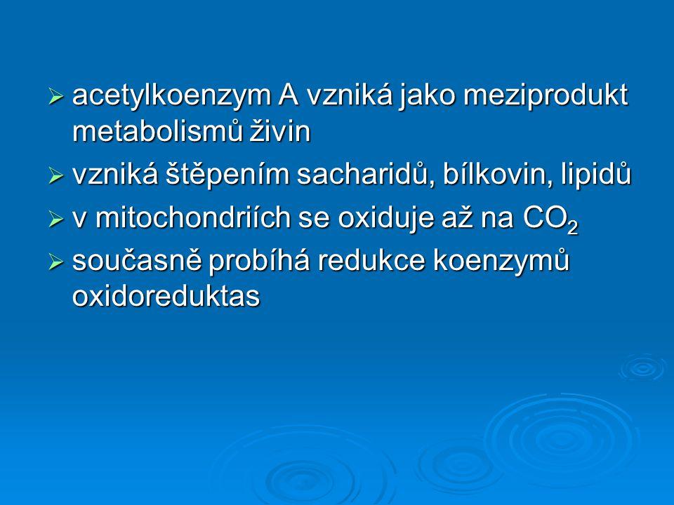  acetylkoenzym A vzniká jako meziprodukt metabolismů živin  vzniká štěpením sacharidů, bílkovin, lipidů  v mitochondriích se oxiduje až na CO 2  současně probíhá redukce koenzymů oxidoreduktas