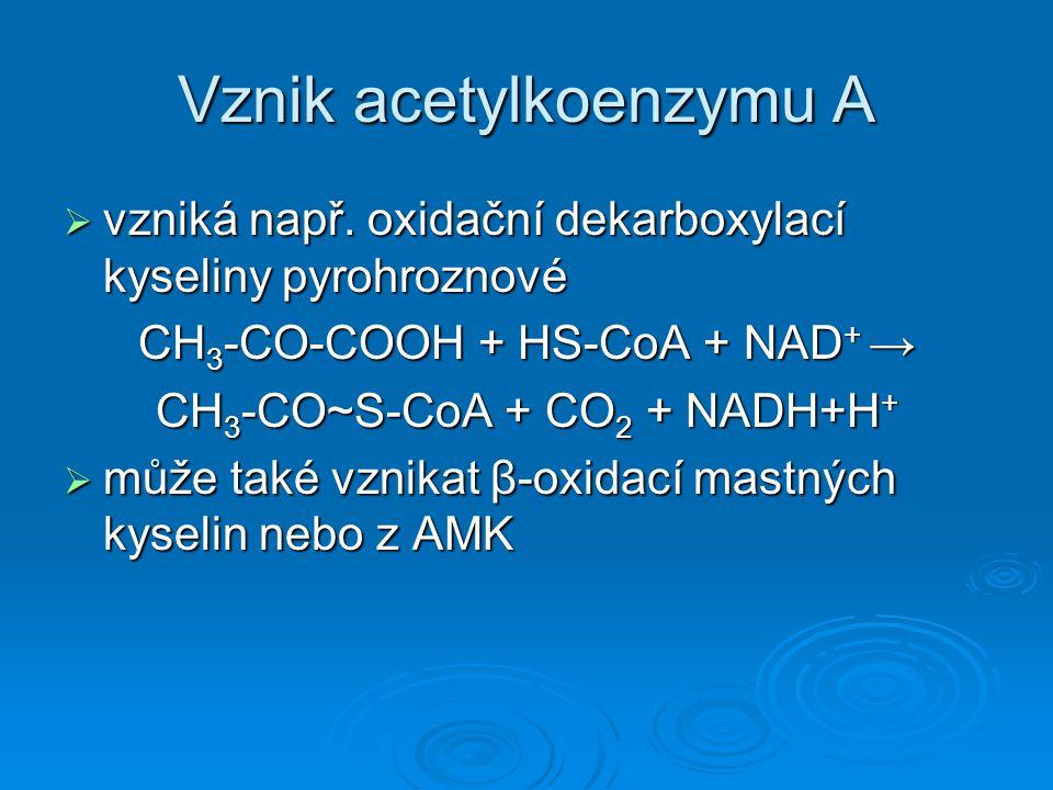 Vznik acetylkoenzymu A  vzniká např. oxidační dekarboxylací kyseliny pyrohroznové CH 3 -CO-COOH + HS-CoA + NAD + → CH 3 -CO~S-CoA + CO 2 + NADH+H + 