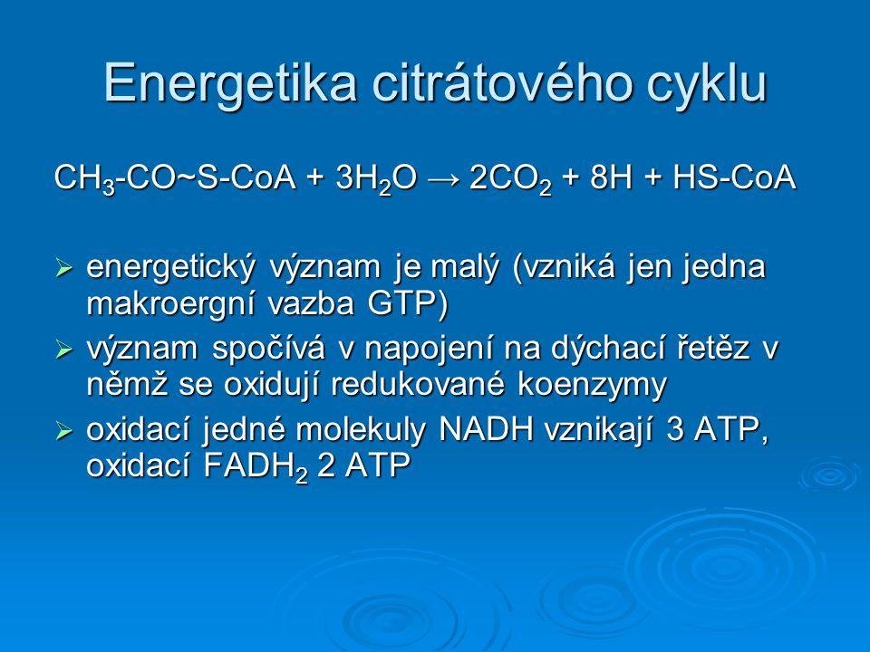  vztaženo na jednu molekulu acetylkoenzymu A: 3 NADH + H + → 3*3 = 9 ATP 3 NADH + H + → 3*3 = 9 ATP 1 FADH 2 → 1*2 = 2 ATP 1 FADH 2 → 1*2 = 2 ATP 1 GTP → 1 ATP 1 GTP → 1 ATP Celkem: 12 ATP Výtěžek citrátového cyklu