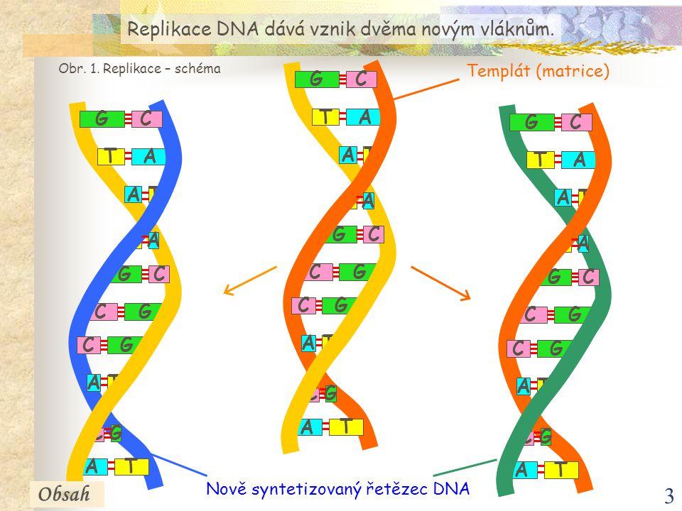 3 A T T G GC G T A C GC T A A C C A T G A T T G GC G T A C GC T A A C C A T G A T T G GC G T A C GC T A A C C A T G Nově syntetizovaný řetězec DNA Rep