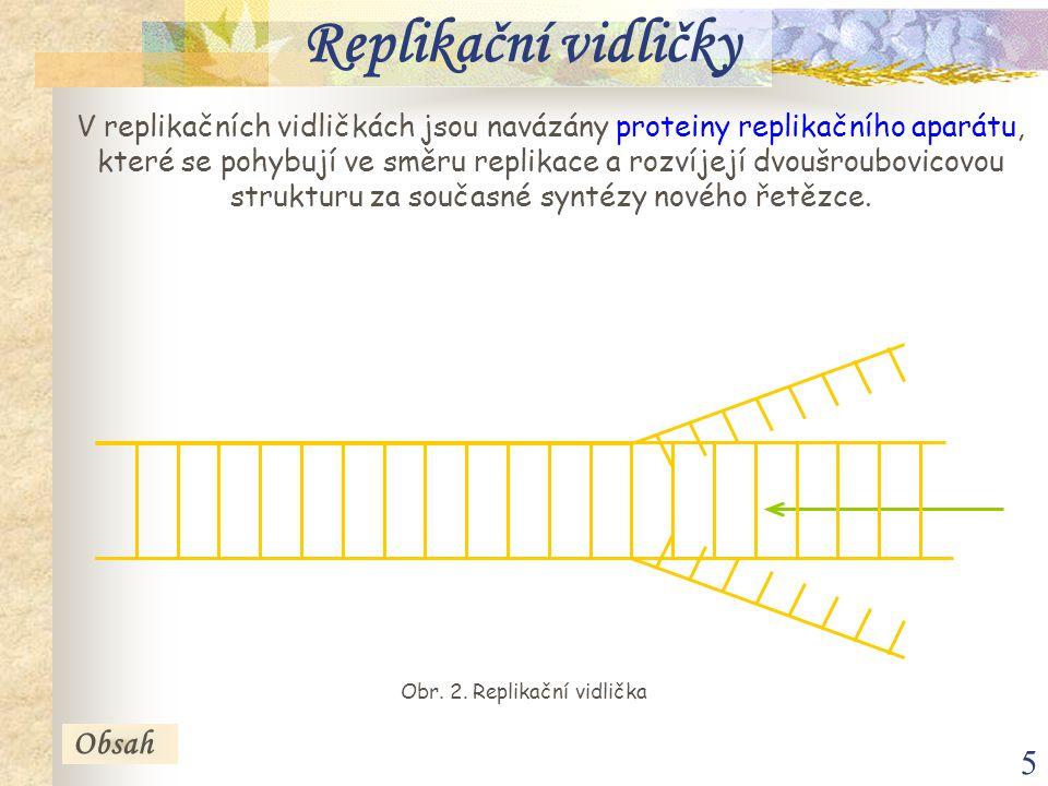 5 Replikační vidličky V replikačních vidličkách jsou navázány proteiny replikačního aparátu, které se pohybují ve směru replikace a rozvíjejí dvoušrou