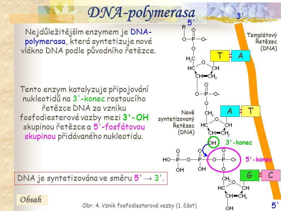 8 Nukleotidy vstupují do reakce jako energeticky bohaté nukleosidtrifosfáty (např.