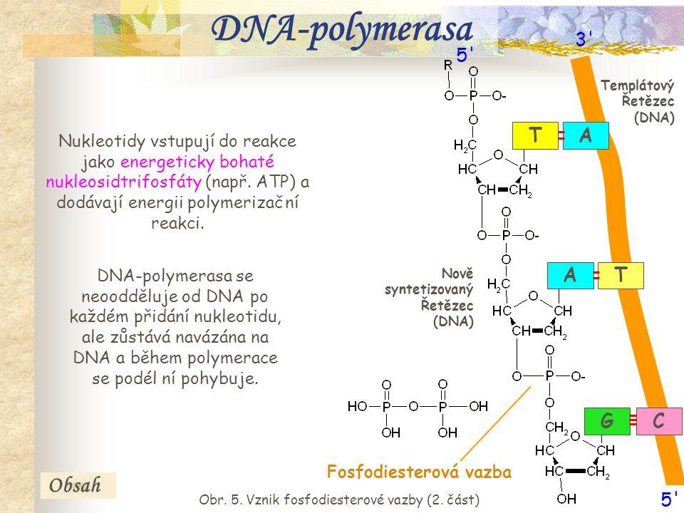 8 Nukleotidy vstupují do reakce jako energeticky bohaté nukleosidtrifosfáty (např. ATP) a dodávají energii polymerizační reakci. DNA-polymerasa se neo