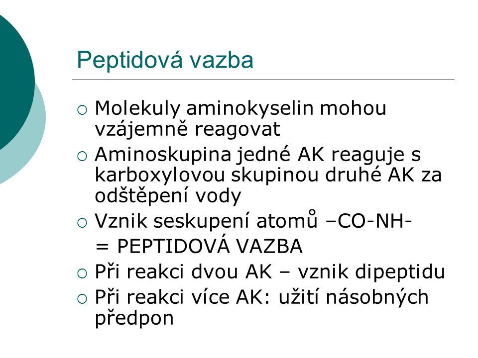 Peptidová vazba  Molekuly aminokyselin mohou vzájemně reagovat  Aminoskupina jedné AK reaguje s karboxylovou skupinou druhé AK za odštěpení vody  V