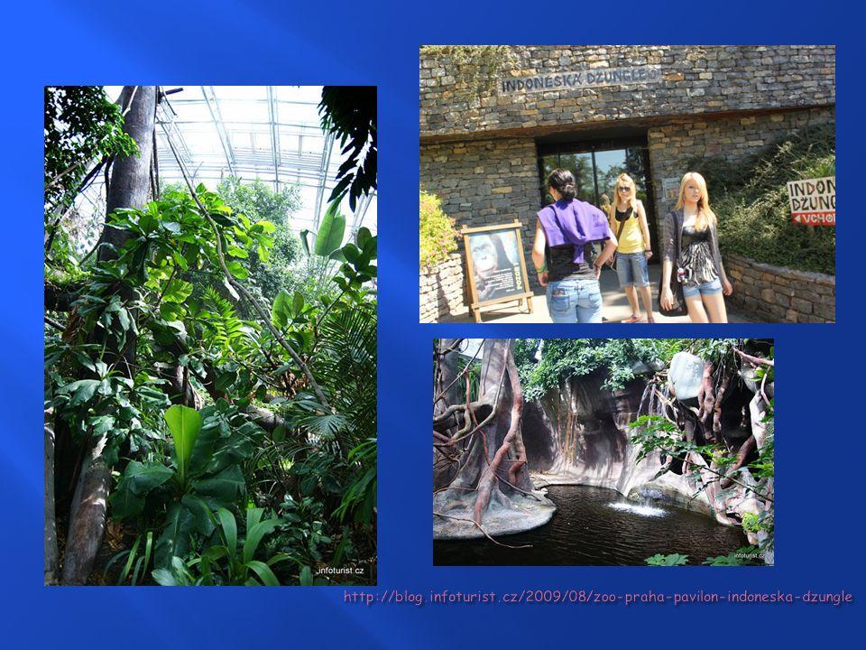  Vznik pavilonu v roce 2004 na místě bývalého pavilonu opic  Jeden z největších projektů v Evropě  Celková plocha je 4000 m 2  Hala má eliptický p