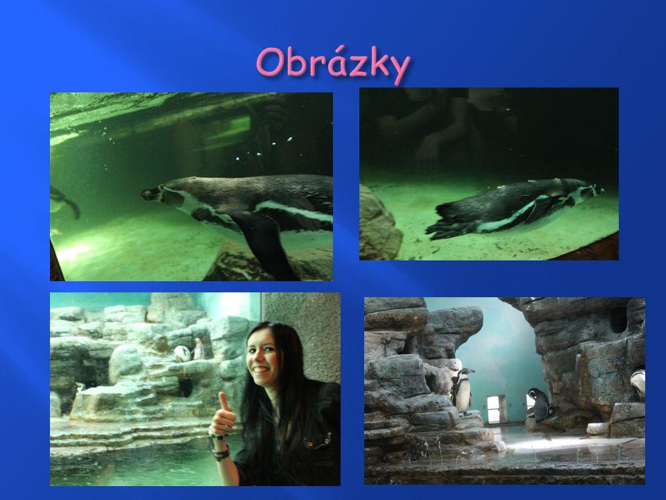 Vznik pavilonu v roce 2004  Větší vodní plocha pro jejich plavecké závody  Pavilon tučňáků připomíná jejich pravý domov  Pouze jeden druh – tučňá